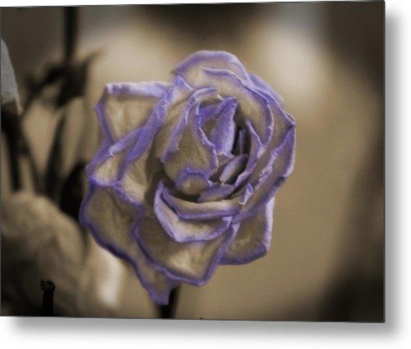 Dried Rose In Sienna And Ultra Violet Metal Print