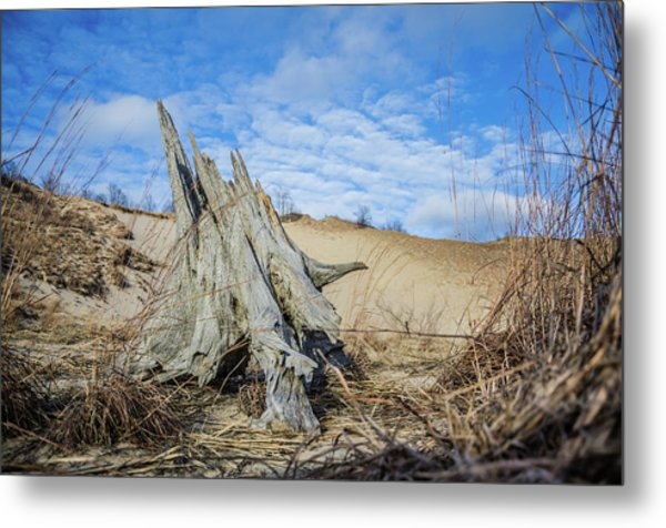Dried Stump At Warren Dunes Metal Print