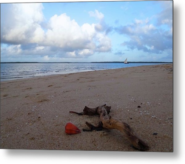 Driftwood And Shell On The Beach Metal Print
