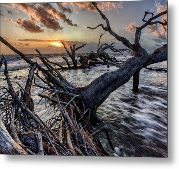 Driftwood Beach 4 Metal Print