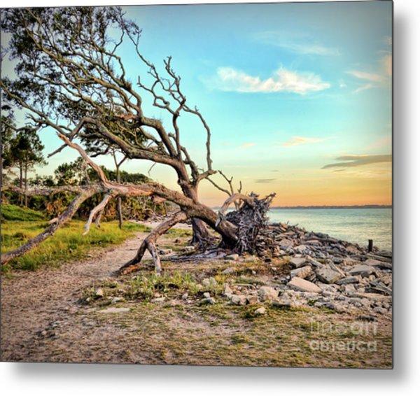 Driftwood Beach Morning 2 Metal Print