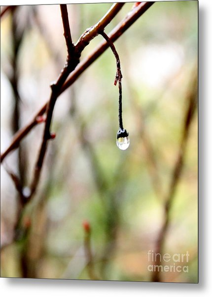 Drop Of Rain Metal Print