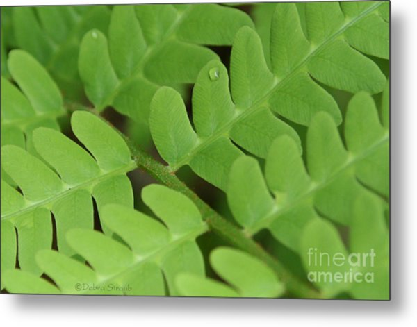 Droplet On Fern Metal Print by Debra Straub