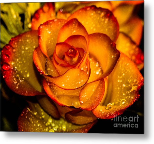 Droplet Rose Metal Print