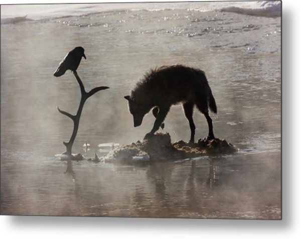 Druid Wolf And Raven Silhouette Metal Print