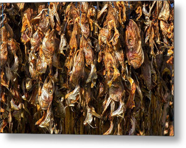 Drying Fish Heads - Iceland Metal Print