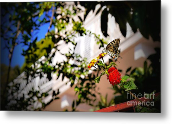 Dubrovniks Butterfly Metal Print