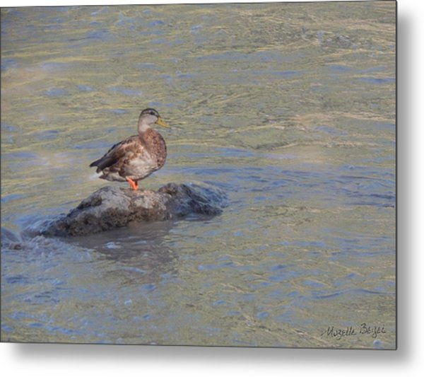 Duck Alone On The Rock Metal Print