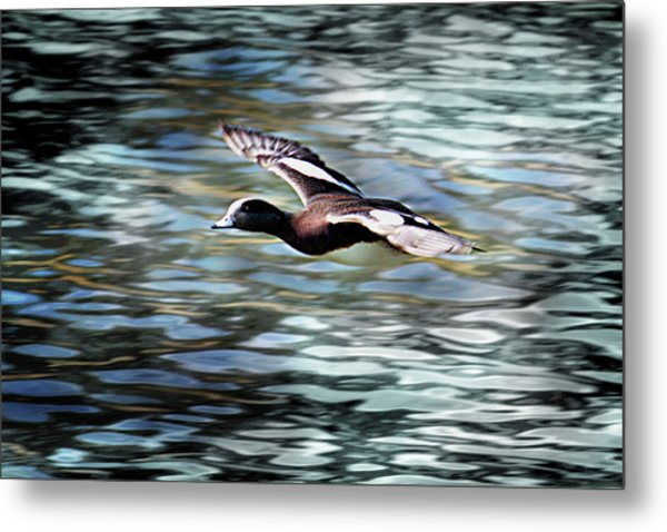 Duck Leader Metal Print