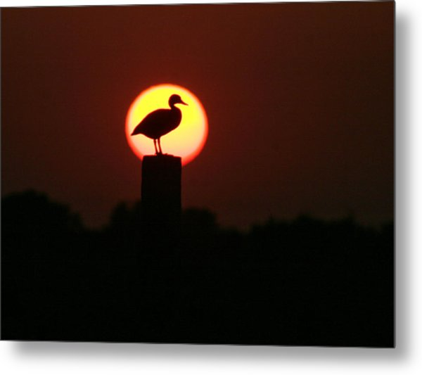 Duck On A Post Metal Print