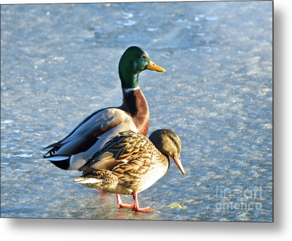 Duck Pair On Frozen Lake Metal Print