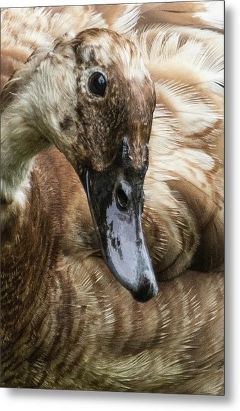 Ducks Head Metal Print