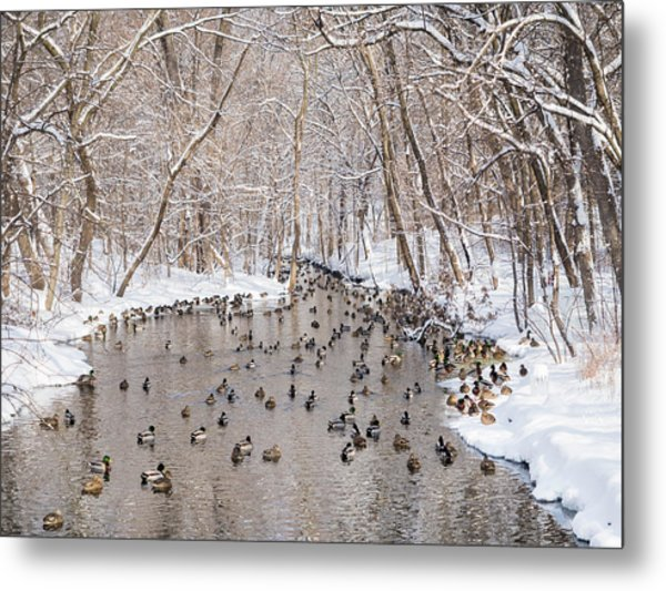 Ducks In A Creek Metal Print