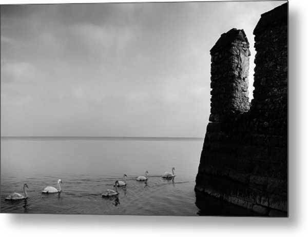 Ducks In Lake Garda, Italy Metal Print