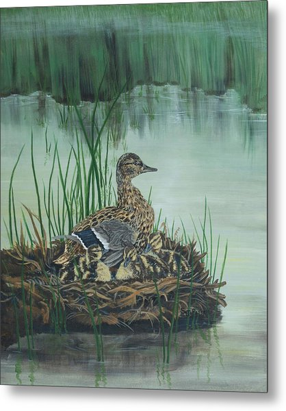 Ducks In Lifting Fog Metal Print