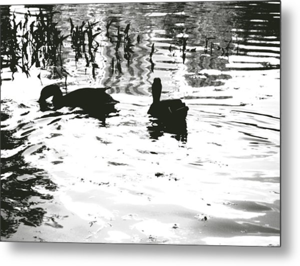 Ducks In Piedmont Park Metal Print