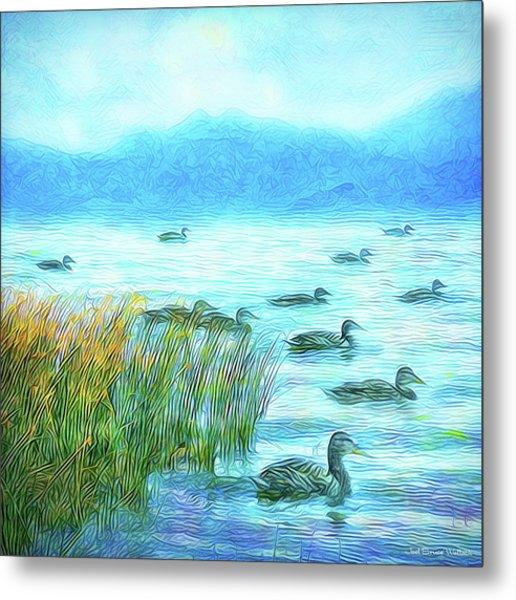 Ducks On Misty Morn - Lake In Boulder County Colorado Metal Print