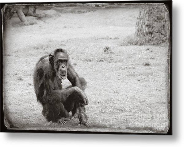 Metal Print featuring the photograph Dude by Sandy Adams