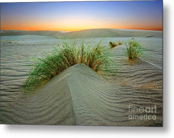 Dune Grass Of Bruneau Idaho Metal Print