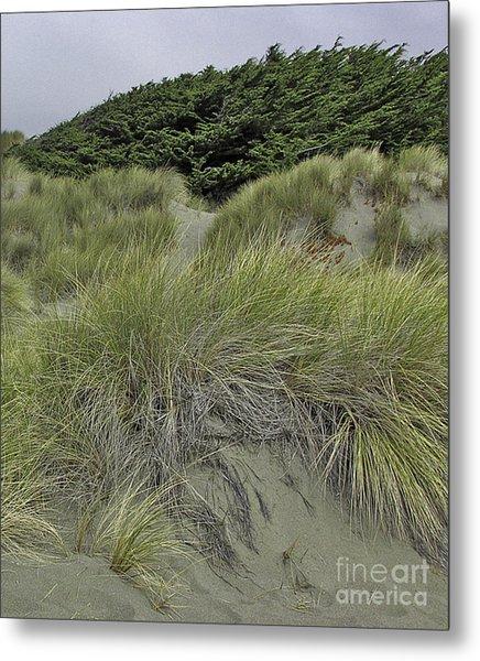 Bodega Dunes #3 Metal Print