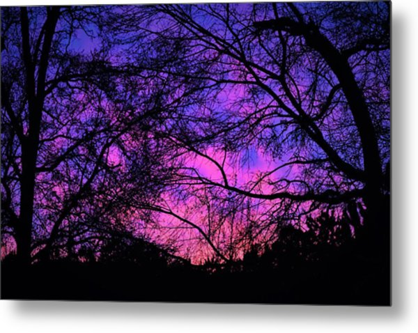 Dusk And Nature Intertwine Metal Print