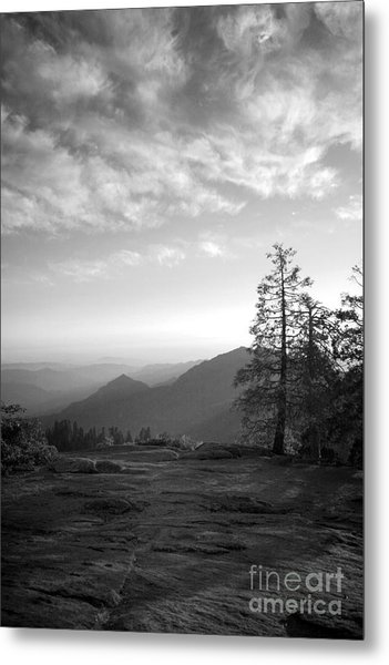 Dusk In Sequoia Metal Print