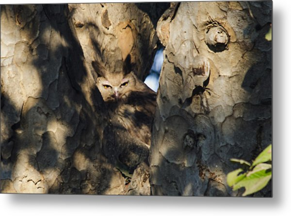 Dusky Horned Owl  Metal Print