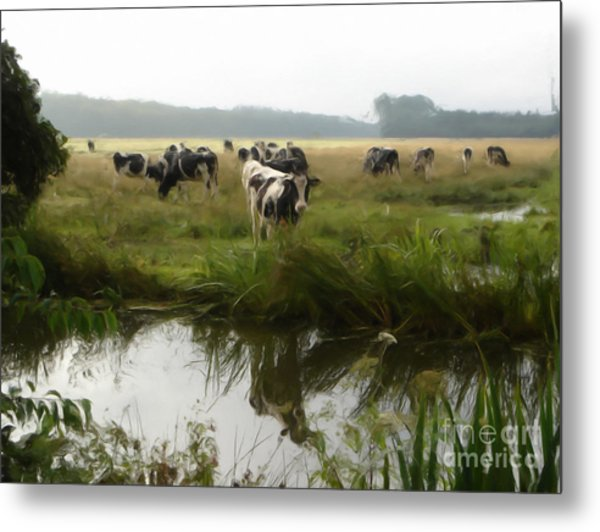 Dutch Cows Metal Print