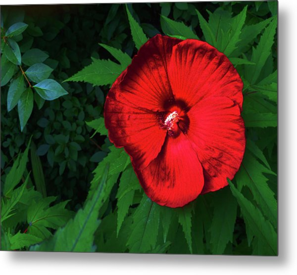 Dynamic Red Metal Print