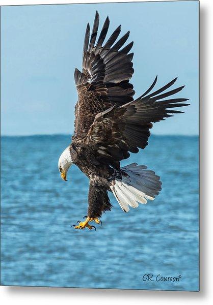 Eagle Dive Metal Print