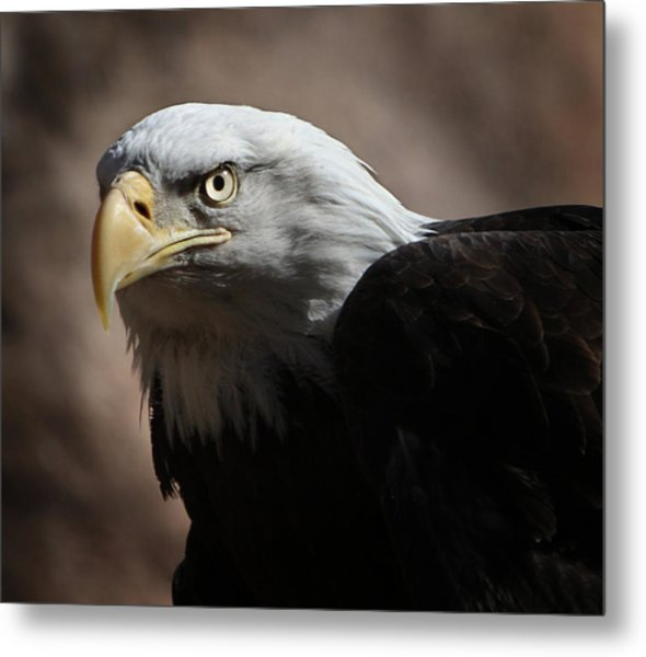 Eagle Eyed Metal Print
