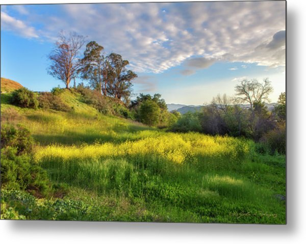 Eagle Grove At Lake Casitas In Ventura County, California Metal Print