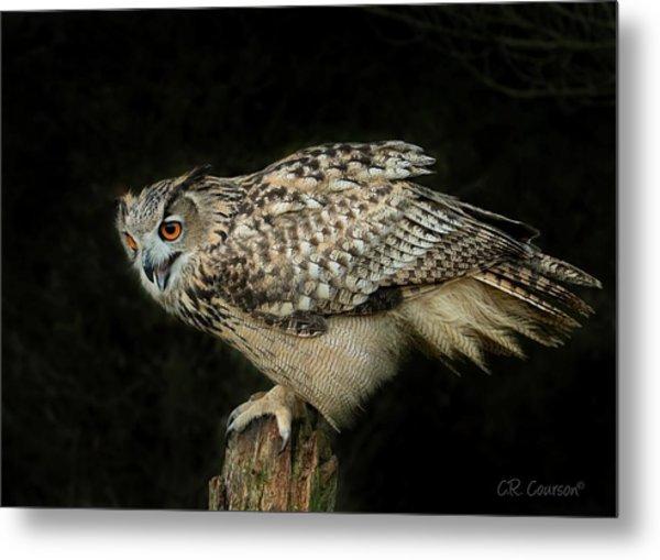 Eagle-owl Metal Print