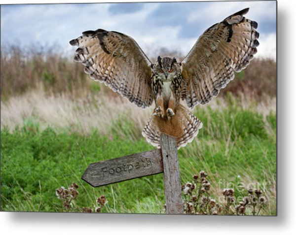 Eagle Owl On Signpost Metal Print