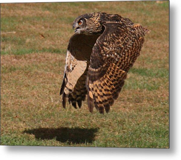 Eagle Owl On The Hunt 2 Metal Print