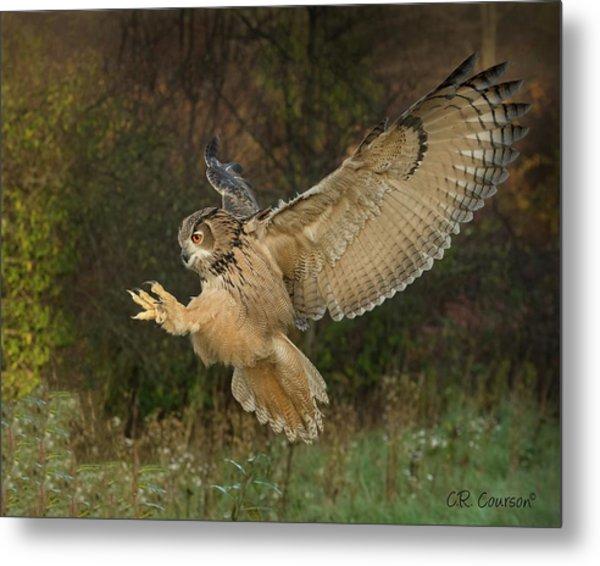 Eagle-owl Wings Back Metal Print