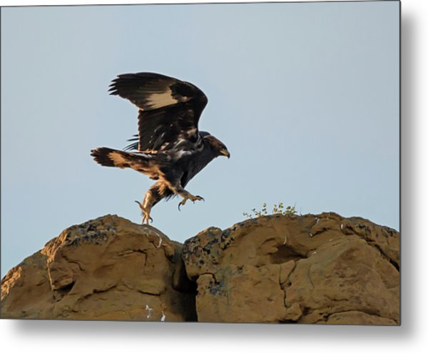 Eagle Rock Hopping Metal Print by Loree Johnson