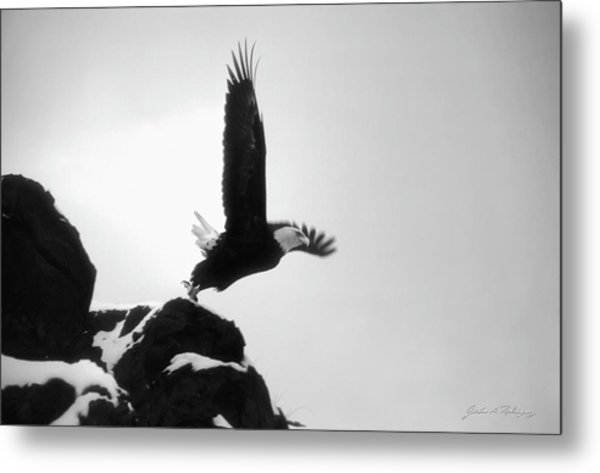 Eagle Takeoff At Adak, Alaska Metal Print
