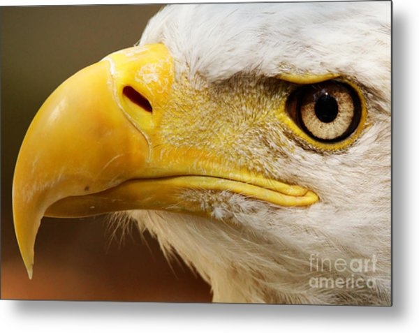 Eagles Eyes Metal Print