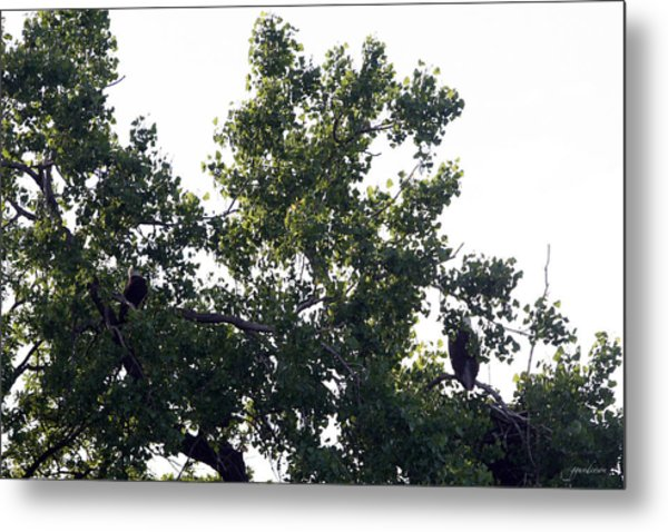 Eagles On West Lake Metal Print