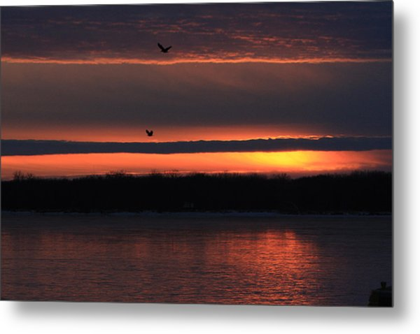 Eagles Over The Mississippi Metal Print by Dave Clark