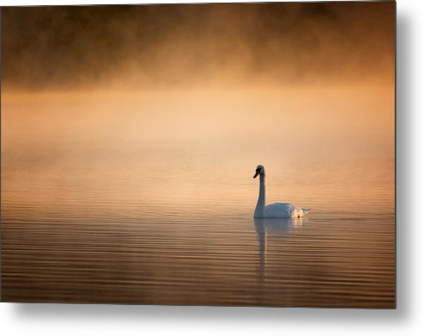 Early Bird 2015 Metal Print