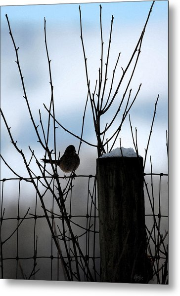 Early Bird Metal Print by Holly Ethan