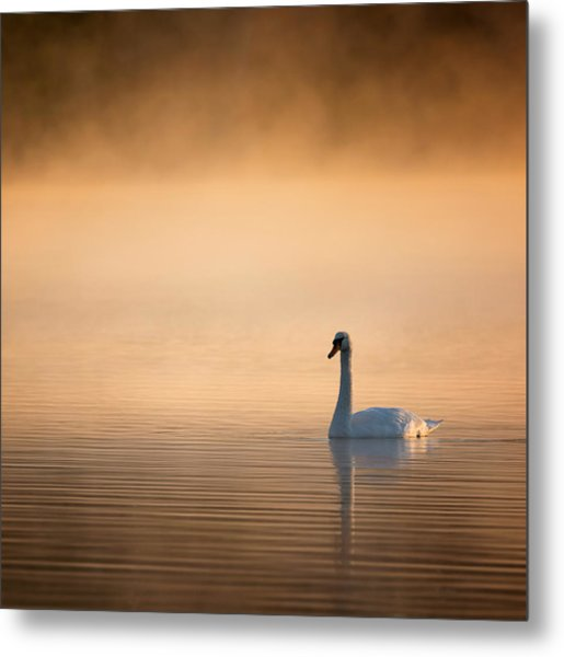 Early Bird Square Metal Print