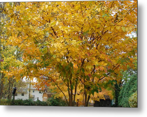 Early Fall Metal Print by Gregory Smith