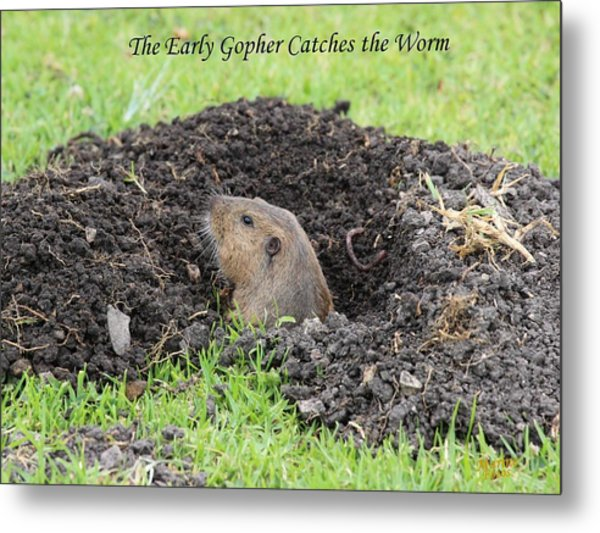 Early Gopher Catches The Worm Metal Print