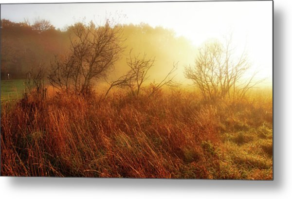 Early Morning Country Metal Print
