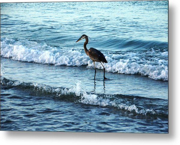 Early Morning Heron Beach Walk Metal Print
