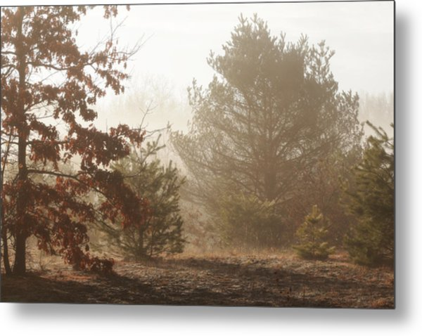 Metal Print featuring the photograph Early Morning Nature by Scott Hovind