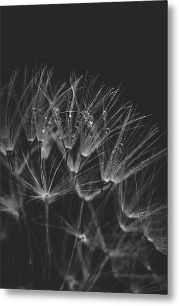 Early Morning Rituals Metal Print